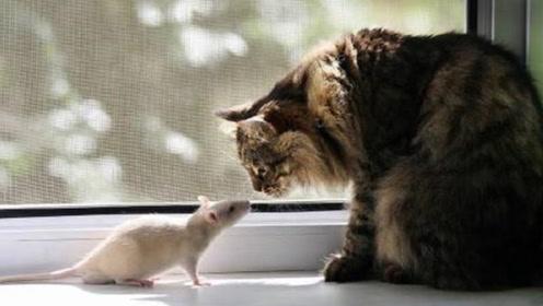 猫和老鼠的奇怪故事!小猫总把老鼠放到鞋里,老鼠:这猫跟我有仇