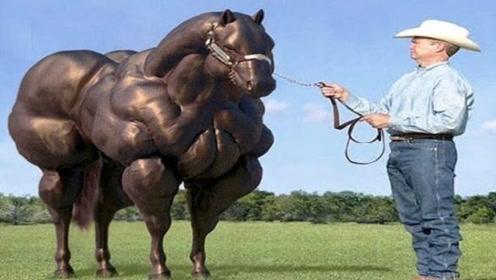 马的极限速度有多块?老外用跑步机测试,果然能日行千里!