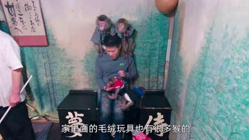 日本这家居酒屋居然猴子是服务员?但居然不管上菜还强吻客人?