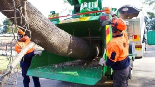 大型树木粉碎机有多牛?把一棵大树扔进去秒变成渣,超级震撼!