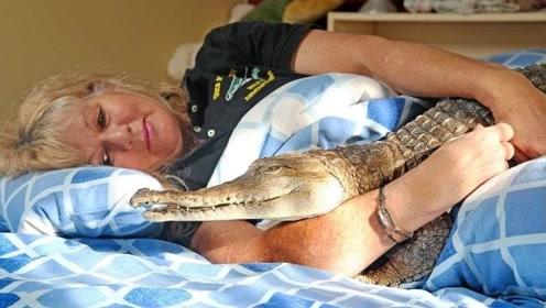 女子养鳄鱼40多年,每天抱着鳄鱼睡觉,吓得老公提出离婚!