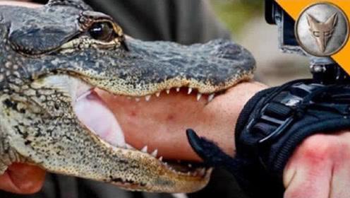 恐怖一幕!实拍小伙作死把胳膊放进鳄鱼嘴里,结果下一秒悲剧发生