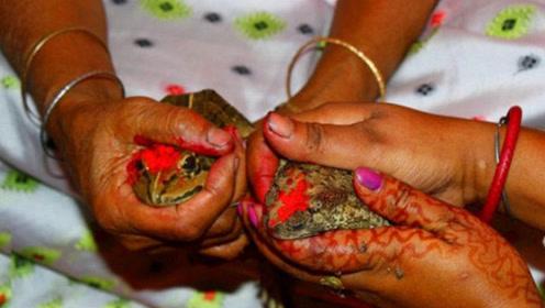 """印度人为了""""求雨"""",竟然给青蛙举办婚礼,网友:活得不如青蛙"""