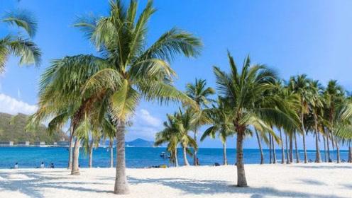 """最""""特别""""的椰子树,不长椰子长大米,被外国人称为""""米树""""!"""