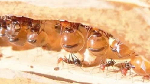 小伙野外发现一群蚂蚁 每只身上都带着钻石 专家鉴定后恍然大悟
