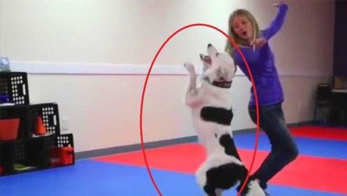 要不是镜头拍下,你能想象这是狗狗做出来的?一起来见识下
