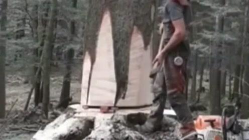 树也有生命 你不提醒它 它还真不知道自己被砍了