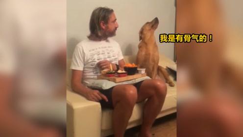 狗:我是绝对不要吃你的东西的!