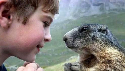对土拨鼠一见钟情,2岁男孩连续10年上山拜访,超越种族的友情