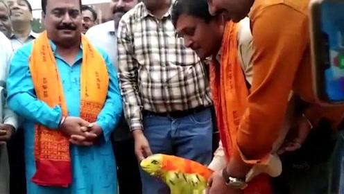不到2个月 印度为求雨结婚的青蛙又离婚了
