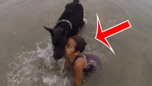 小女孩在海边玩耍,突然被狗狗扑倒,下一秒让人意外!