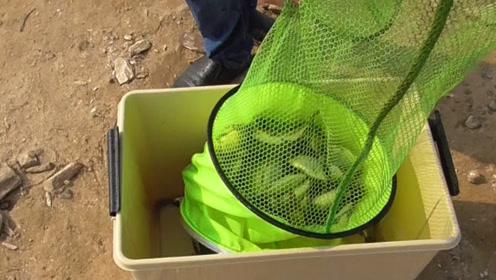 洞庭湖野钓:小伙通宵夜钓,下午6点到早上8点,这鱼获真厉害!