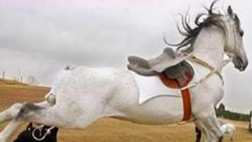 比特犬攻击白马,却被马儿一脚踢中脑门,比特:整个狗都不好了