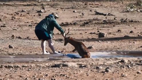 羚羊陷入水池无法动弹,路人一把将它拉出,羚羊:感谢救命之恩