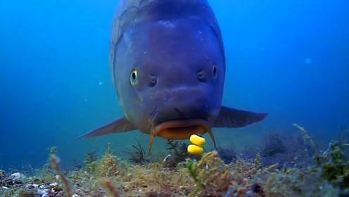鱼是怎么上钩的?小哥用水下相机记录下了这一过程!