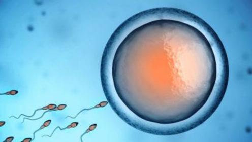 女人怀孕,身体发生什么变化?看完简直有点激动!