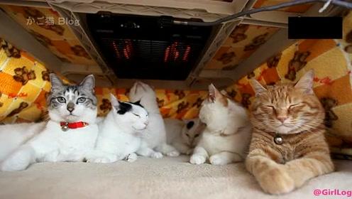 自从家里配备烤火炉,家里猫咪经常神秘消失