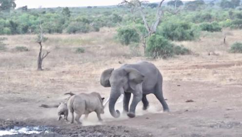 """霸道的犀牛母子霸占水塘,遇到""""硬茬子"""",被大象教训了一顿"""