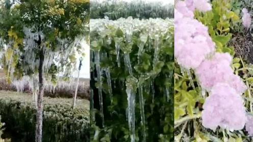 内蒙古突降鹅毛大雪,绿化带喷水挂满冰柱