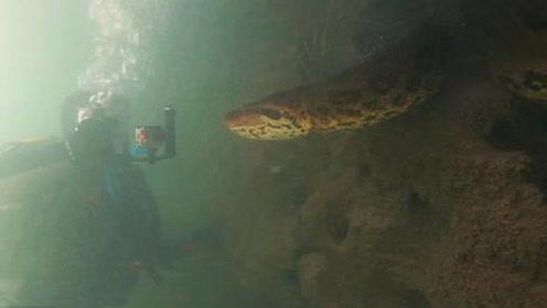 潜水者水下与7米长蟒蛇面对面 系现存最大蛇