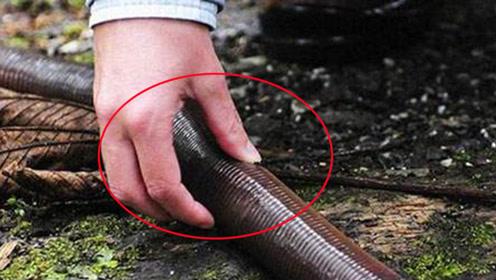 澳洲真的有这么怕吗,蚯蚓都水管这么大,更别的什么螃蟹了!