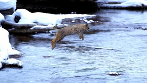 男子河边上遇到一个跳远高手,原地起跳,直接跳过了5米宽的河!