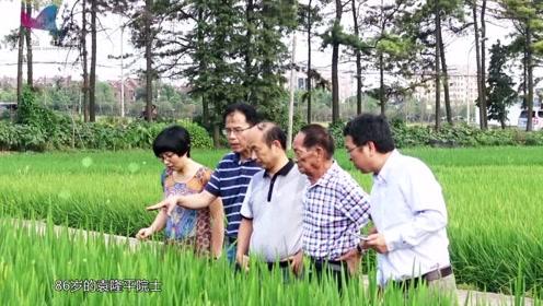 袁隆平:海水稻让滩涂变良田