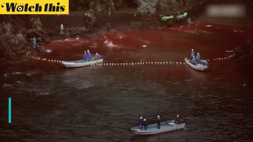 海外记者偷拍日本捕鲸过程 一片血海惨不忍睹