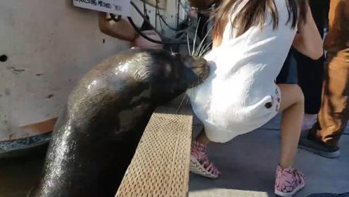 小女孩转过身坐在护栏上,海豹直接一跃而起,咬住了小女孩的衣服