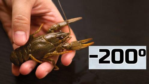 龙虾在零下200度瞬间冰冻,放进水里5秒后!不敢相信眼前一幕