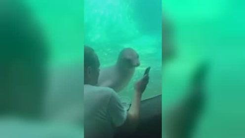 海狮也是手机控?芝加哥动物园游客玩手机 海狮凑近一起瞅