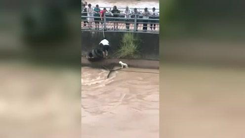 狗狗也知道好人在救自己 乖乖在那里