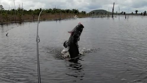 从没见过这么凶猛霸气的大鱼,男子苦战半天还是败下阵来