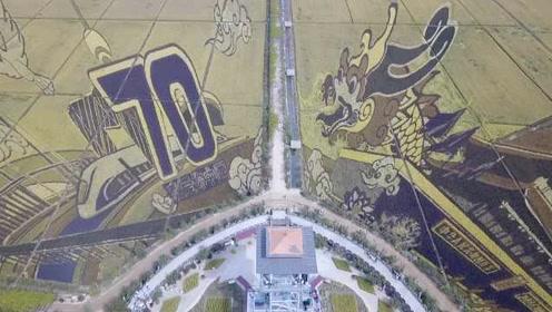 惊艳!150亩巨幅3D稻田画表白祖国,绘满各地标志性建筑