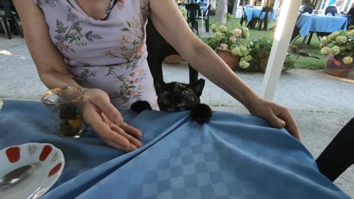 在咖啡馆混吃混喝的猫咪,这架势吃不到是不会走的