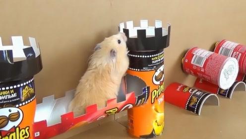 用吃完的薯片罐给小仓鼠做一个障碍挑战,通关也太轻松了,不一般