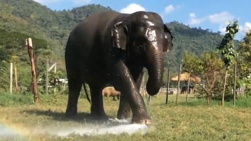 大象不小心踩坏洒水器,手忙脚乱想将其堵上,接下来的举动笑岔气