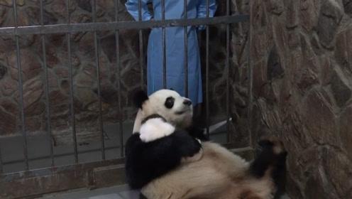看到奶妈站在笼子外,熊猫妈妈一脸警觉:你是不是又想偷我的娃!