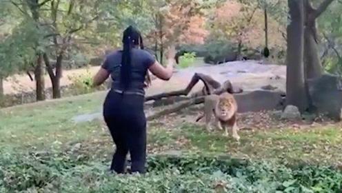 作死!美国一女子偷闯狮子园在狮子面前做这个动作