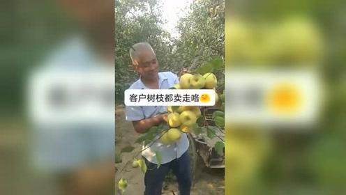 长得这么可爱的水果,客户连树枝一起买!