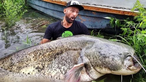 男子钓240斤大鲶鱼,这么大的还是第一次见,1个月也吃不完吧