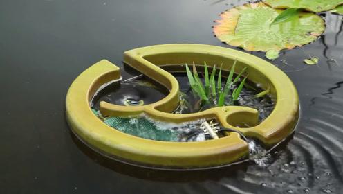 """把这个""""花盆""""往池塘里一扔,脏水就变清水,太神奇了"""
