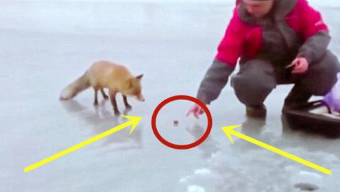 男子在冰钓,突然来了一只狐狸,讲述了一个暖心的故事!
