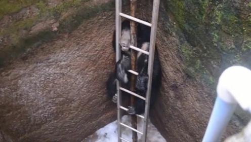 黑熊不小心掉进深井里,村民往井里猛灌水,熊:谁想出来的馊主意