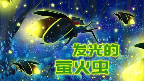 萤火虫晚上能发光多长时间呢?_03