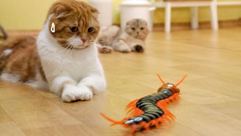 主人给猫咪买一只蜈蚣玩具,5只猫咪吓得到处跑,憋住千万别笑
