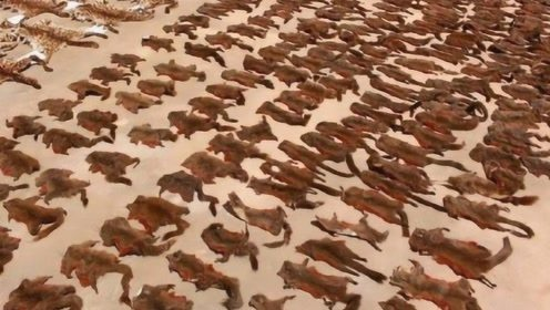 """中国竟然有动物泛滥成灾了?被迫下""""悬赏令"""",抓一只奖励4元!"""