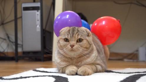 依靠静电给猫挂个气球,猫猫们会有什么反应呢