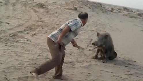 男子挑衅200斤大野猪,直接把野猪惹怒了,下秒憋住别笑!