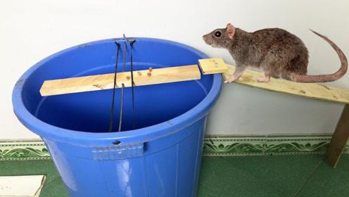 小伙设计的老鼠跳水陷阱,一下午就收获满满,老鼠:我有话要讲!